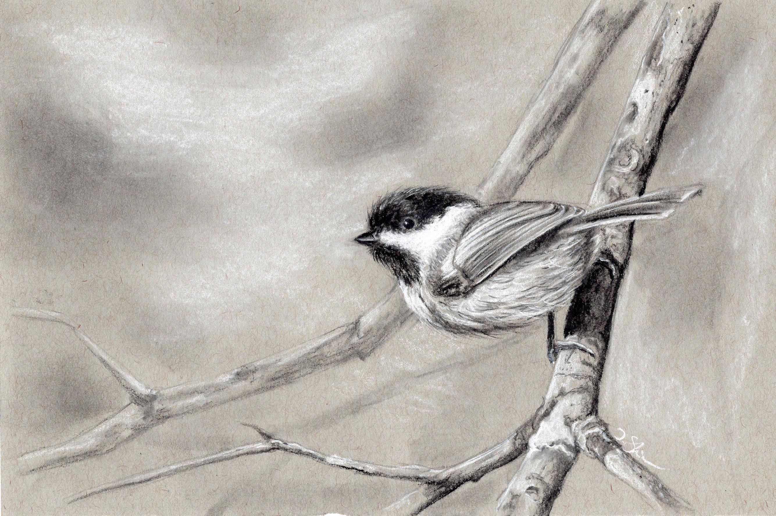 Tree-Chickadee
